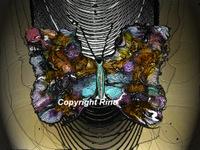Butterfly assymétrique nocturne  (Cards)