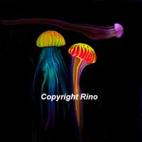 La méduse espiègle
